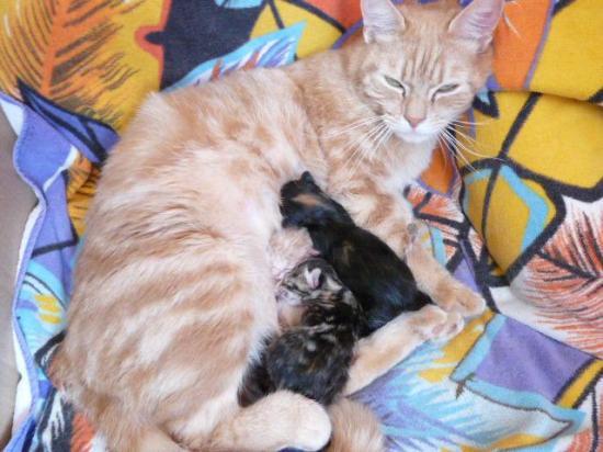 kitty-et-ses-bebes.jpg