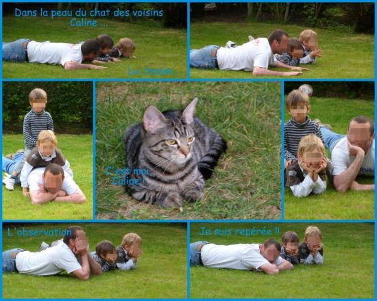 l-apprentissage-de-la-chasse-feline.jpg
